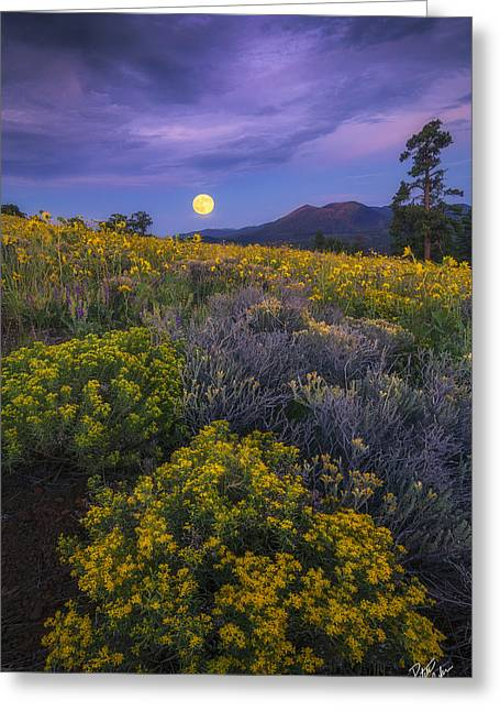 Payoff Greeting Card by Peter Coskun
