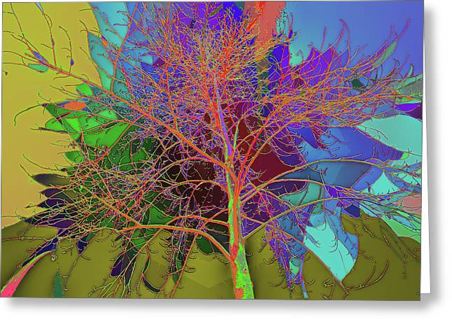 P C C Elm In The Wait Of Bloom Greeting Card