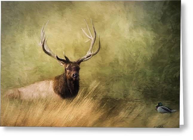 Peace Is A Journey - Wildlife Art Greeting Card by Jordan Blackstone