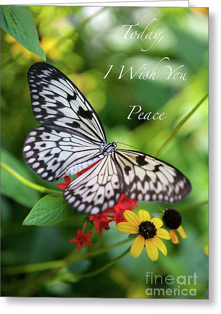 Peaceful Butterfly Card Or Poster Greeting Card by Carol Groenen