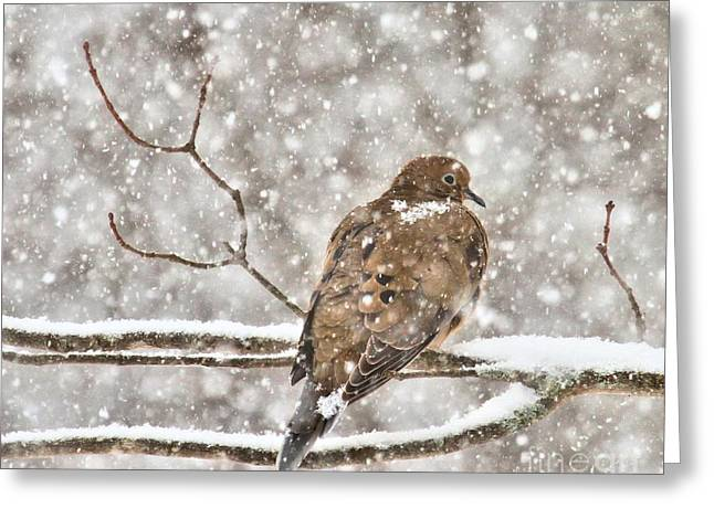 Greeting Card featuring the photograph Peaceful by Debbie Stahre