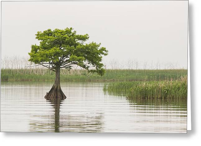 Greeting Card featuring the photograph Peaceful Feeling by Julie Andel