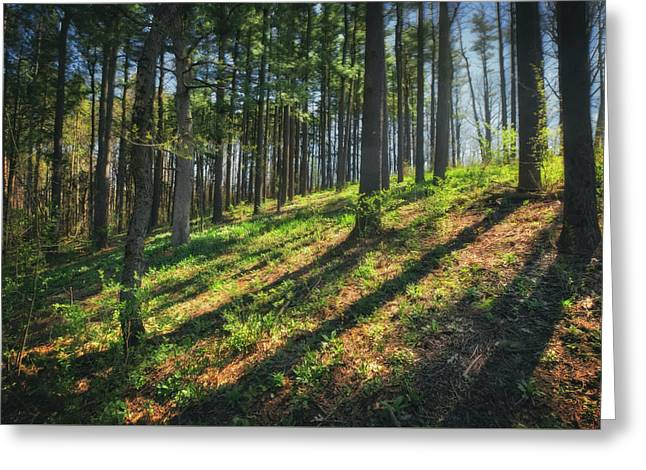 Peaceful Forest 4 - Spring At Retzer Nature Center Greeting Card by Jennifer Rondinelli Reilly - Fine Art Photography