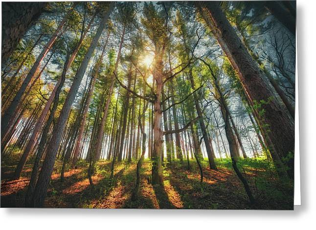 Peaceful Forest 5 - Spring At Retzer Nature Center Greeting Card by Jennifer Rondinelli Reilly - Fine Art Photography