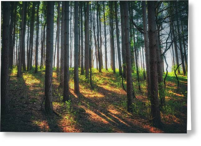 Peaceful Forest - Spring At Retzer Nature Center Greeting Card by Jennifer Rondinelli Reilly - Fine Art Photography