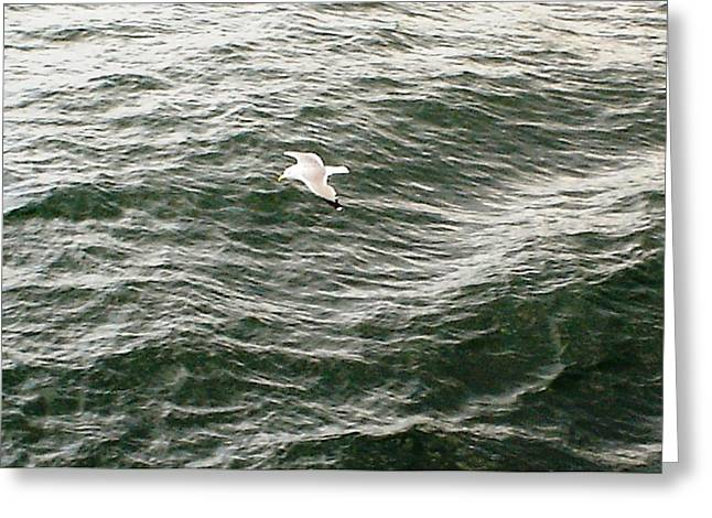 Greeting Card featuring the photograph Peaceful Gliding At Sea by Piety Dsilva