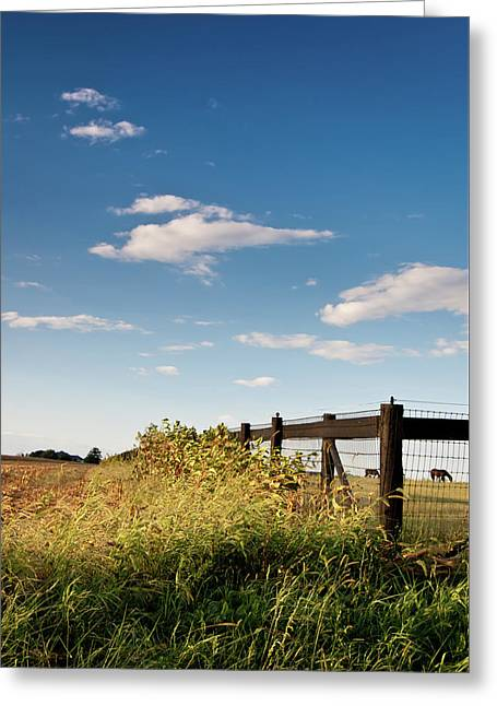 Peaceful Grazing Greeting Card