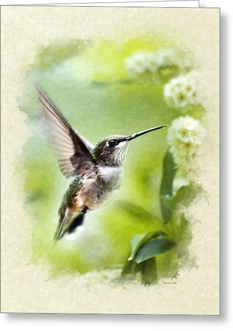Peaceful Love Hummingbird Blank Note Card Greeting Card