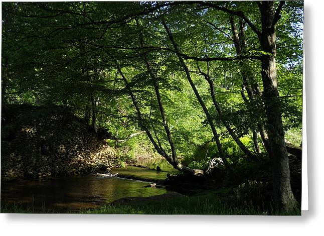 Greeting Card featuring the photograph Peaceful Mountain Stream by Diannah Lynch