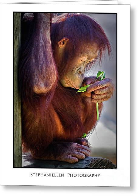 Peaceful Orangutan Greeting Card by Stephanie Hayes