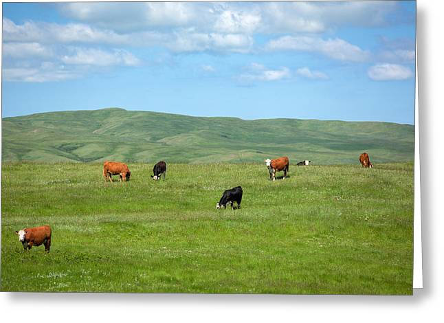 Peaceful Pasture Greeting Card by Todd Klassy