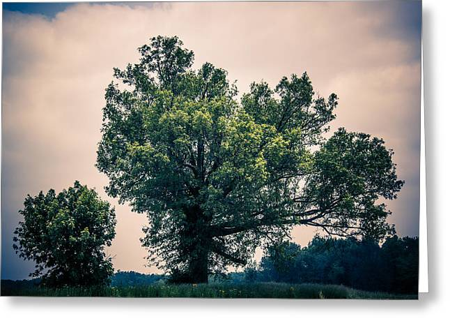 Peaceful Place Along Busy Highway  Greeting Card