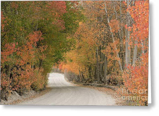 Greeting Card featuring the photograph Peaceful Sierra Morning by Sandra Bronstein