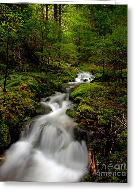 Peaceful Stream Greeting Card by Mike Reid