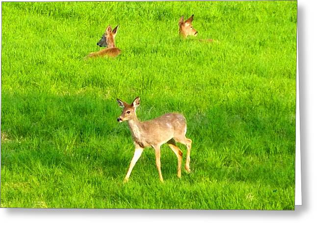 Peaceful Togetherness Greeting Card