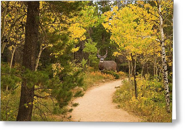 Peaceful Walk Greeting Card