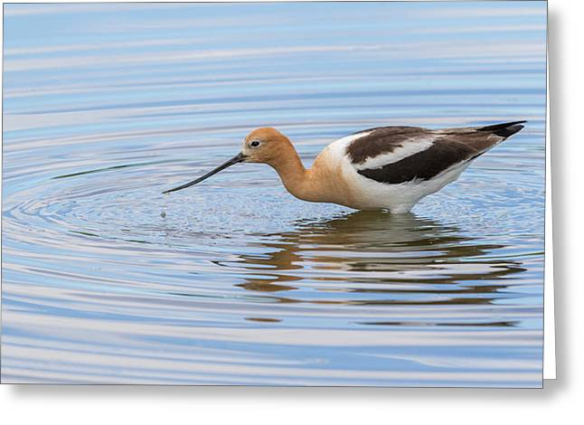 Peaceful Water And Nature Greeting Card by Vicki Stansbury