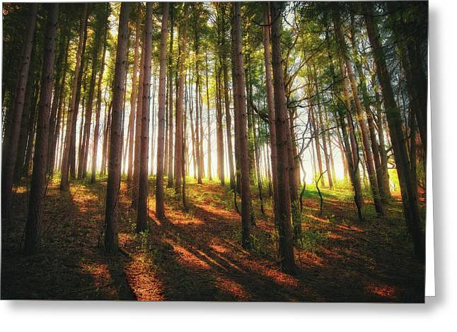 Peaceful Wisconsin Forest 2 - Spring At Retzer Nature Center Greeting Card