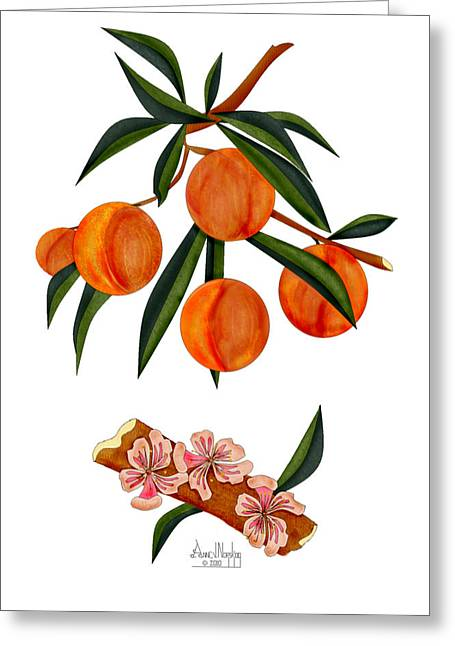 Peach And Peach Blossoms Greeting Card by Anne Norskog