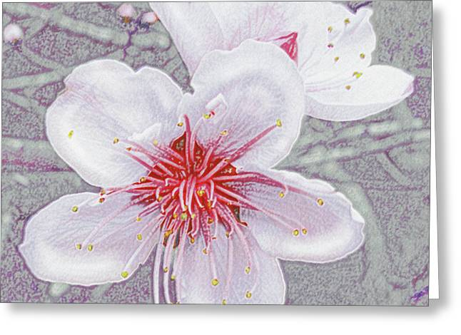 Peach Blossoms Greeting Card by Jane Schnetlage