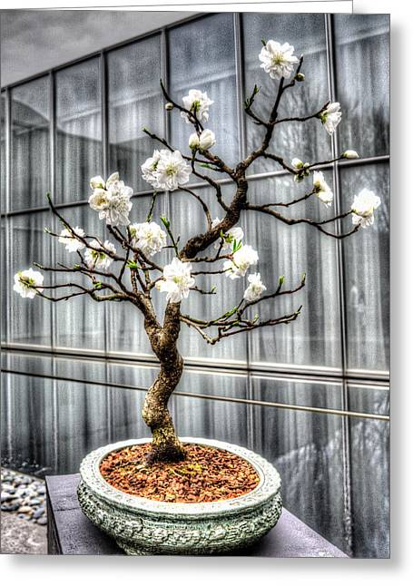 Peach Bonsai Tree Greeting Card by Wade Brooks