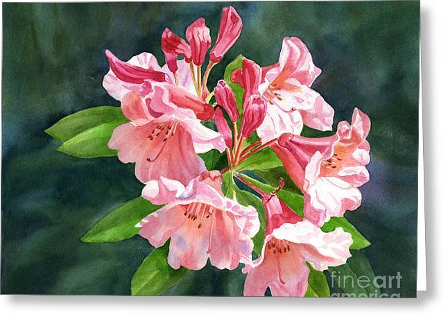 Peach Colored Rhododendron Flowers Dark Background Greeting Card by Sharon Freeman