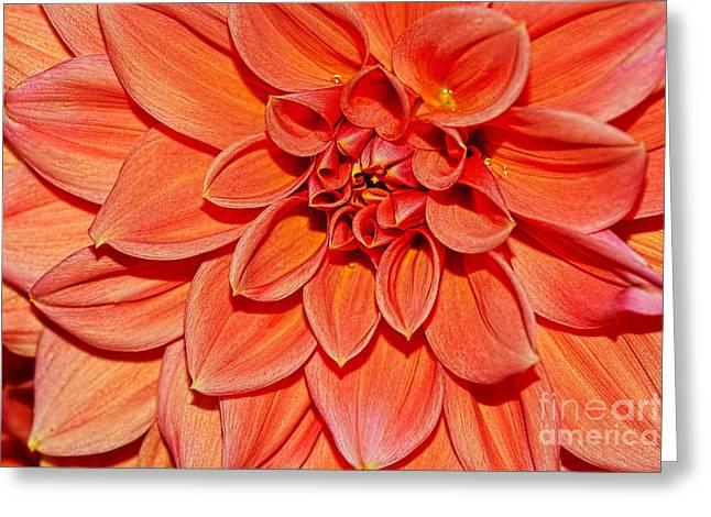 Peach Dahlia Macro By Kaye Menner Greeting Card by Kaye Menner