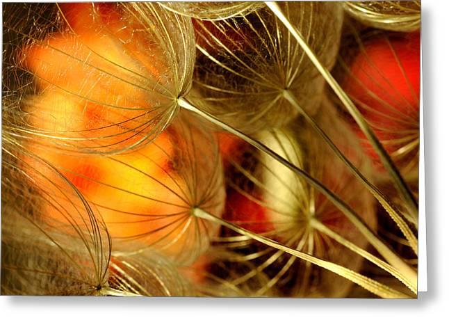 Peach Dandelions Greeting Card by Iris Greenwell