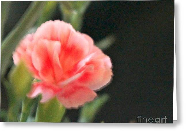 Greeting Card featuring the photograph Peach Dream by Cathy Dee Janes
