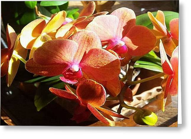 Peach Orchid Blossoms Greeting Card