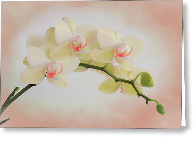 Peach Orchid Spray Greeting Card