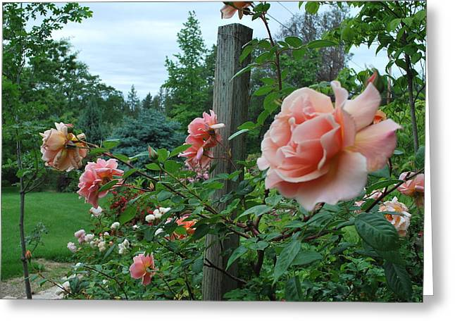 Peach Rose Greeting Card by Linda Sramek