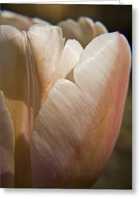 Peach Tulip Greeting Card by Teresa Mucha
