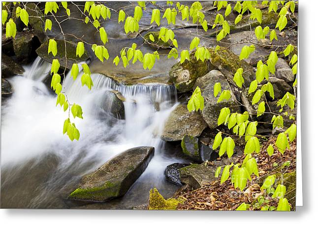Peacham Brook Spring Greeting Card