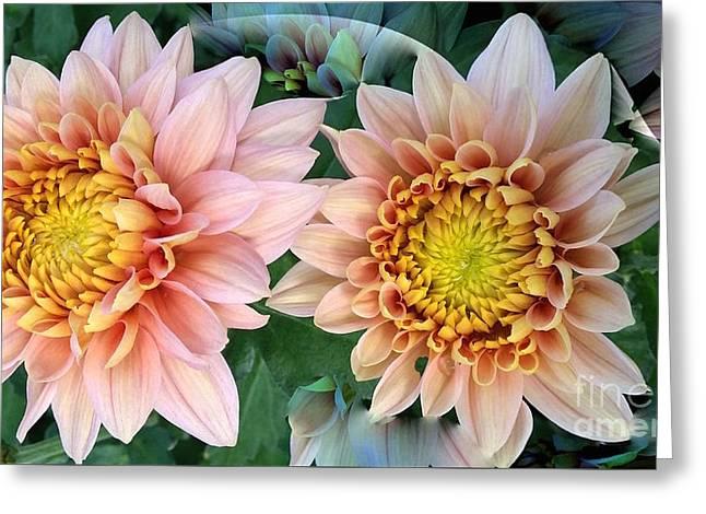 Peachy Chrysanthemums Greeting Card by Jeannie Rhode