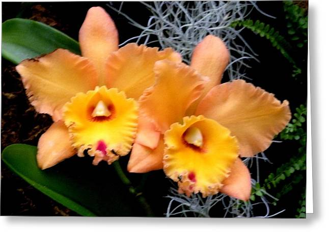 Peachy Couple Greeting Card by Jeanette Oberholtzer