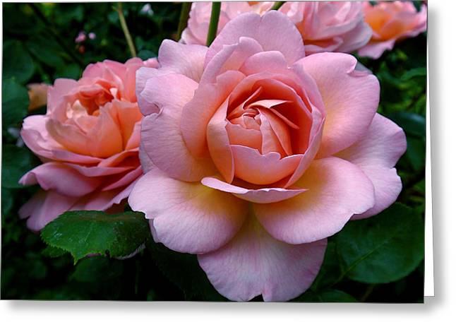 Peachy Pink Greeting Card