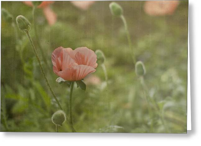 Peachy Poppies Greeting Card by Rebecca Cozart