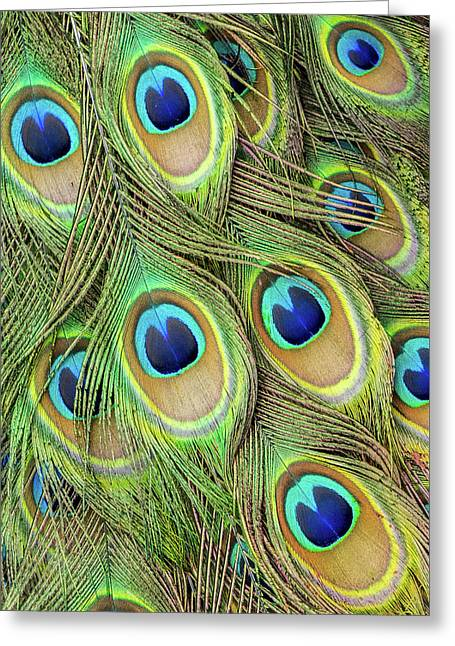 Living Peacock Abstract Greeting Card