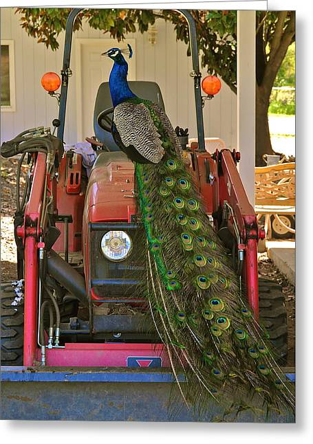 Peacock And His Ride Greeting Card