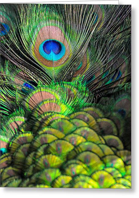 Peacock Brilliance Greeting Card by Emilia Brasier