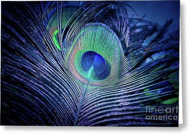 Peacock Feather Blush Greeting Card by Sharon Mau