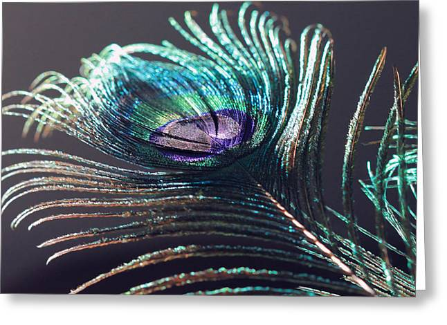 Peacock Feather In Sun Light Greeting Card