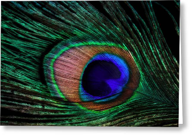 Peacock Feather Greeting Card by June Marie Sobrito