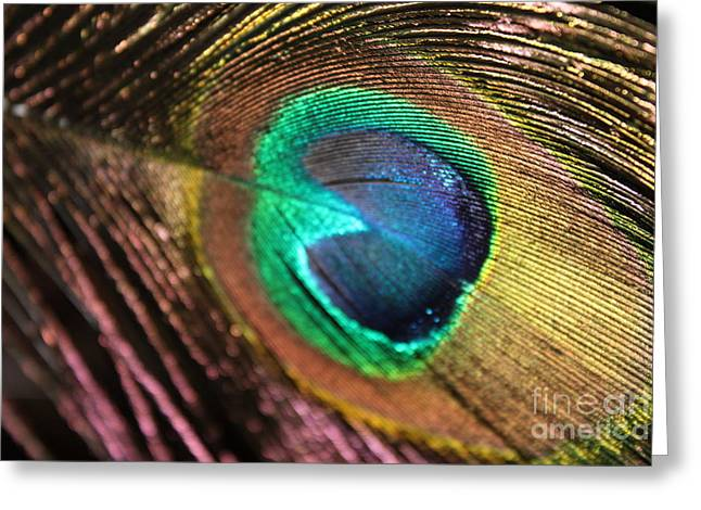 Greeting Card featuring the photograph Peacock Feather by Terri Thompson