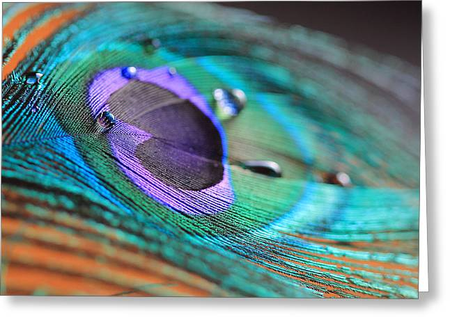 Peacock Feather With Water Drops Greeting Card