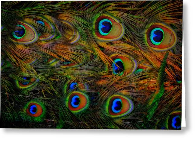 Greeting Card featuring the photograph Peacock Feathers by Harry Spitz