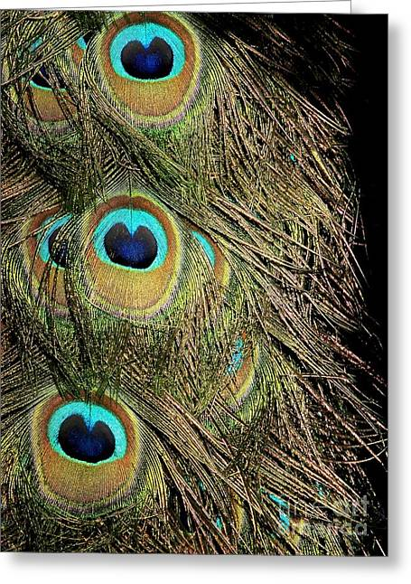 Peacock Feathers Greeting Card by Sabrina L Ryan