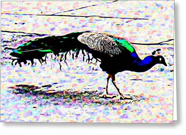 Peacock In Abstract Greeting Card