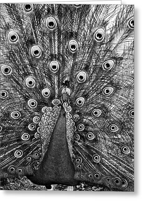 Peacock In Black And White Greeting Card by Steven Ralser